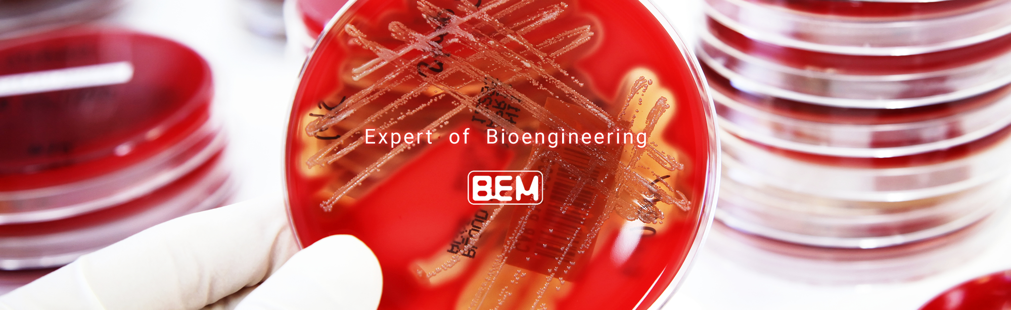 EXPERT OF BIOENGINEERING